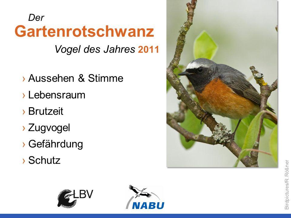 Gartenrotschwanz Aussehen & Stimme Lebensraum Brutzeit Zugvogel Gefährdung Schutz Vogel des Jahres 2011 Der Birdpictures/R. Rößner