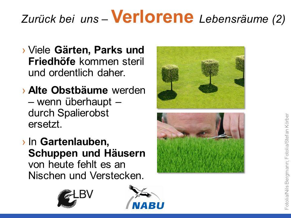 Viele Gärten, Parks und Friedhöfe kommen steril und ordentlich daher. Alte Obstbäume werden – wenn überhaupt – durch Spalierobst ersetzt. In Gartenlau