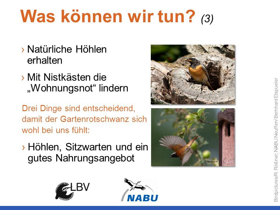 Was können wir tun? (3) Natürliche Höhlen erhalten Mit Nistkästen die Wohnungsnot lindern Drei Dinge sind entscheidend, damit der Gartenrotschwanz sic