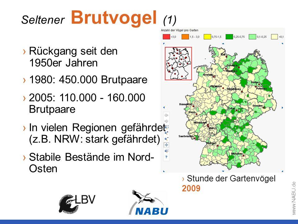 Seltener Brutvogel (1) Stunde der Gartenvögel 2009 Rückgang seit den 1950er Jahren 1980: 450.000 Brutpaare 2005: 110.000 - 160.000 Brutpaare In vielen