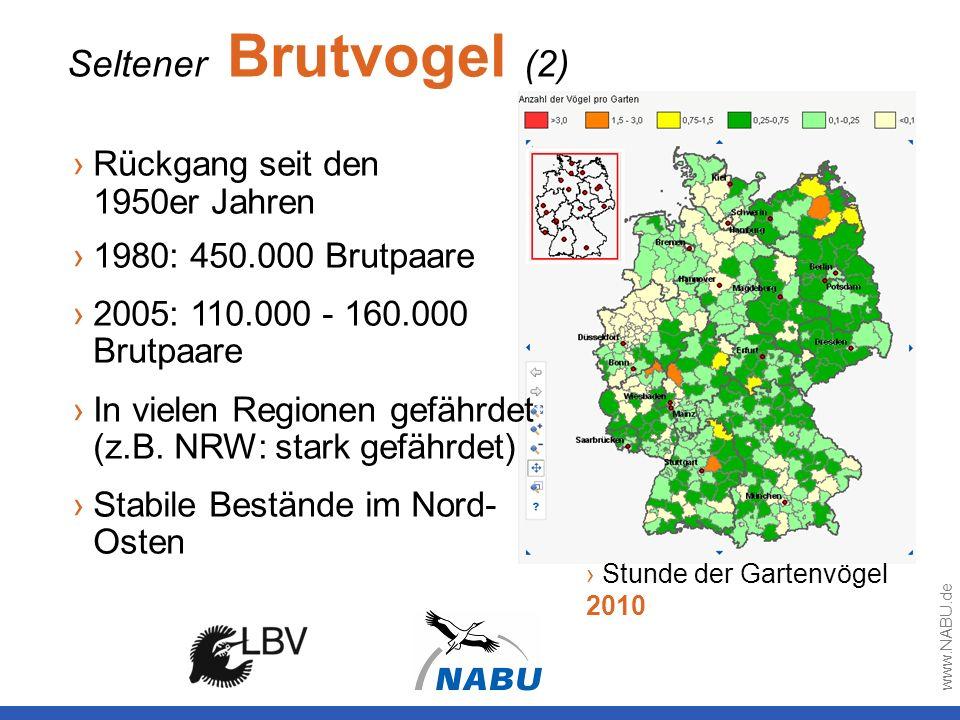 Seltener Brutvogel (2) Stunde der Gartenvögel 2010 Rückgang seit den 1950er Jahren 1980: 450.000 Brutpaare 2005: 110.000 - 160.000 Brutpaare In vielen
