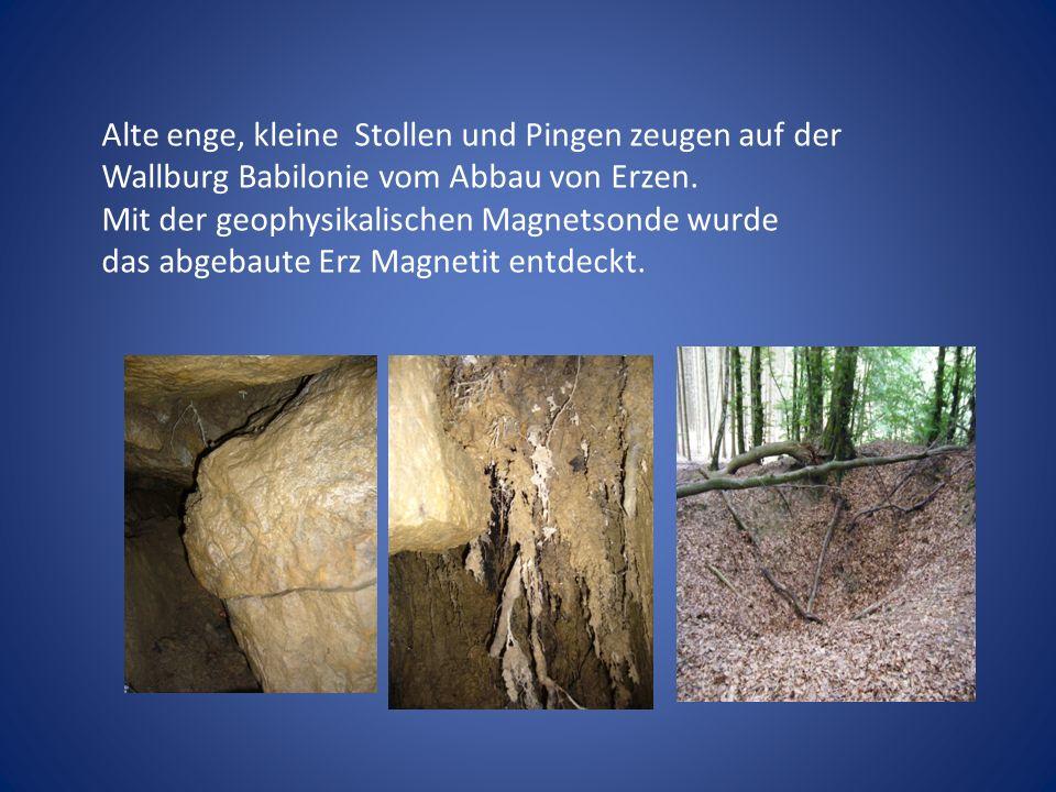 Alte enge, kleine Stollen und Pingen zeugen auf der Wallburg Babilonie vom Abbau von Erzen.