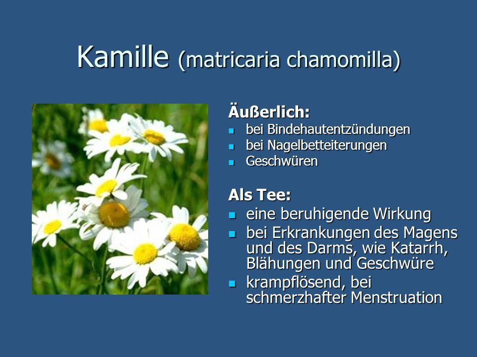Kamille (matricaria chamomilla) Äußerlich: bei Bindehautentzündungen bei Bindehautentzündungen bei Nagelbetteiterungen bei Nagelbetteiterungen Geschwü