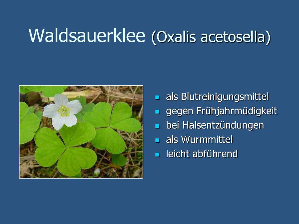 (Oxalis acetosella) Waldsauerklee (Oxalis acetosella) als Blutreinigungsmittel als Blutreinigungsmittel gegen Frühjahrmüdigkeit gegen Frühjahrmüdigkei