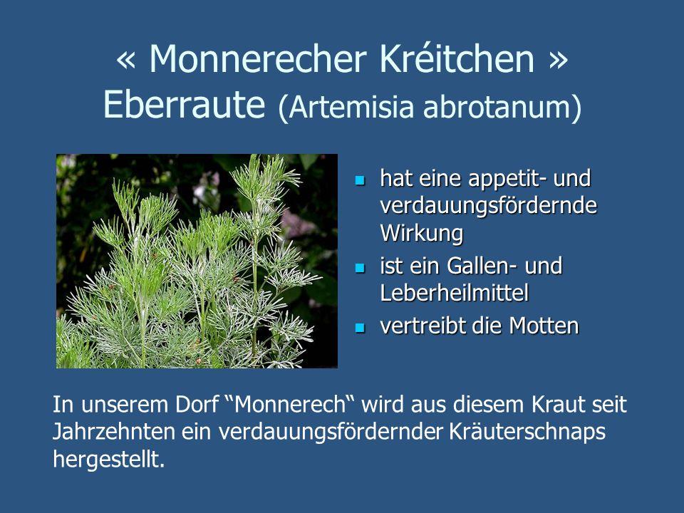 « Monnerecher Kréitchen » Eberraute (Artemisia abrotanum) hat eine appetit- und verdauungsfördernde Wirkung hat eine appetit- und verdauungsfördernde