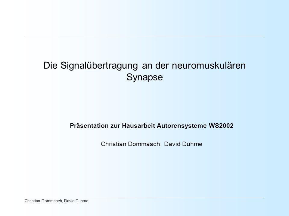 Christian Dommasch, David Duhme Die Signalübertragung an der neuromuskulären Synapse Präsentation zur Hausarbeit Autorensysteme WS2002 Christian Domma