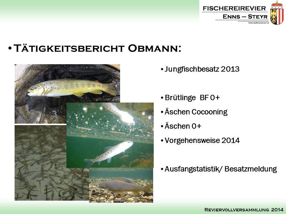 Jungfischbesatz 2013 Brütlinge BF 0+ Äschen Cocooning Äschen 0+ Vorgehensweise 2014 Ausfangstatistik/ Besatzmeldung Tätigkeitsbericht Obmann: Reviervo