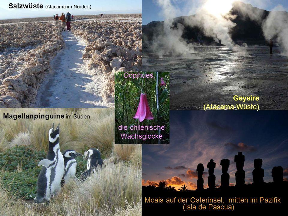 Salzwüste (Atacama im Norden) Geysire (Atacama-Wüste) Moais auf der Osterinsel, mitten im Pazifik (Isla de Pascua) Magellanpinguine im Süden die chilenische Wachsglocke Copihues,