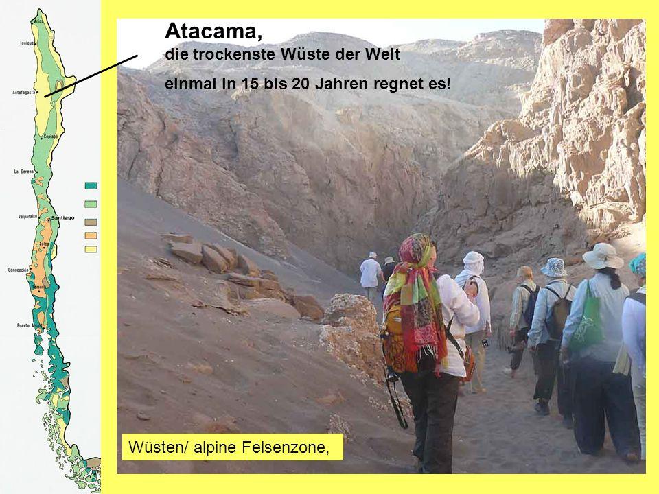 Atacama, die trockenste Wüste der Welt einmal in 15 bis 20 Jahren regnet es.
