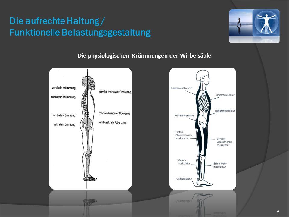 4 Die physiologischen Krümmungen der Wirbelsäule Die aufrechte Haltung / Funktionelle Belastungsgestaltung