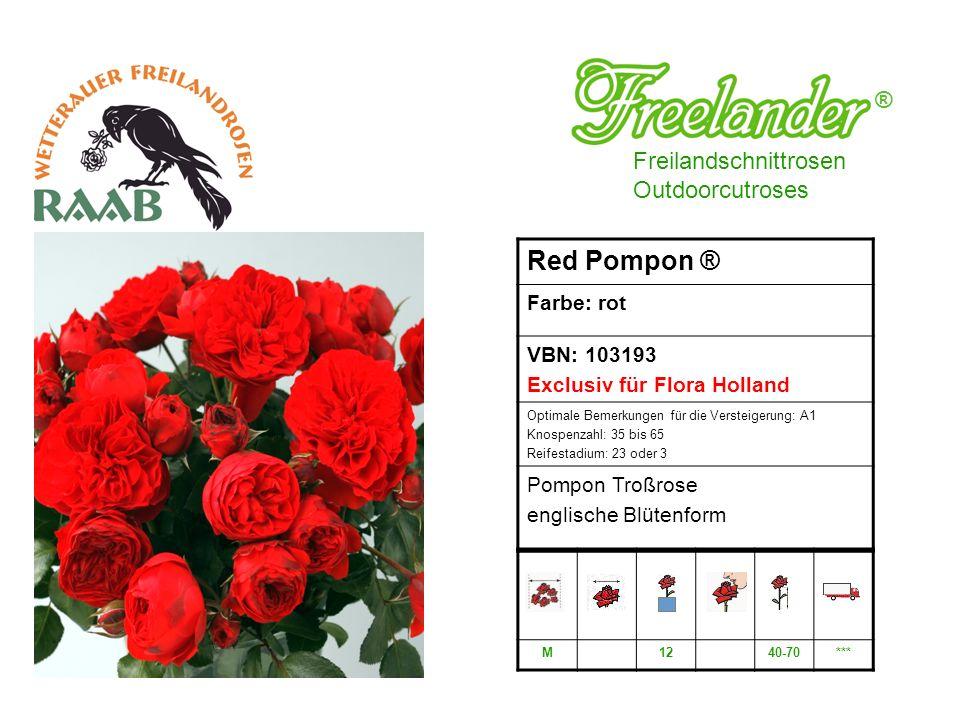 Freilandschnittrosen Outdoorcutroses ® Red Pompon ® Farbe: rot VBN: 103193 Exclusiv für Flora Holland Optimale Bemerkungen für die Versteigerung: A1 Knospenzahl: 35 bis 65 Reifestadium: 23 oder 3 Pompon Troßrose englische Blütenform M1240-70***