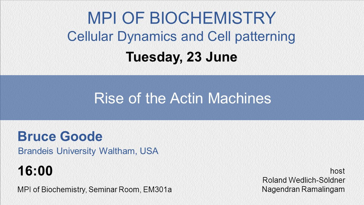 Bruce Goode Rise of the Actin Machines Tuesday, 23 June MPI OF BIOCHEMISTRY Cellular Dynamics and Cell patterning 16:00 MPI of Biochemistry, Seminar R