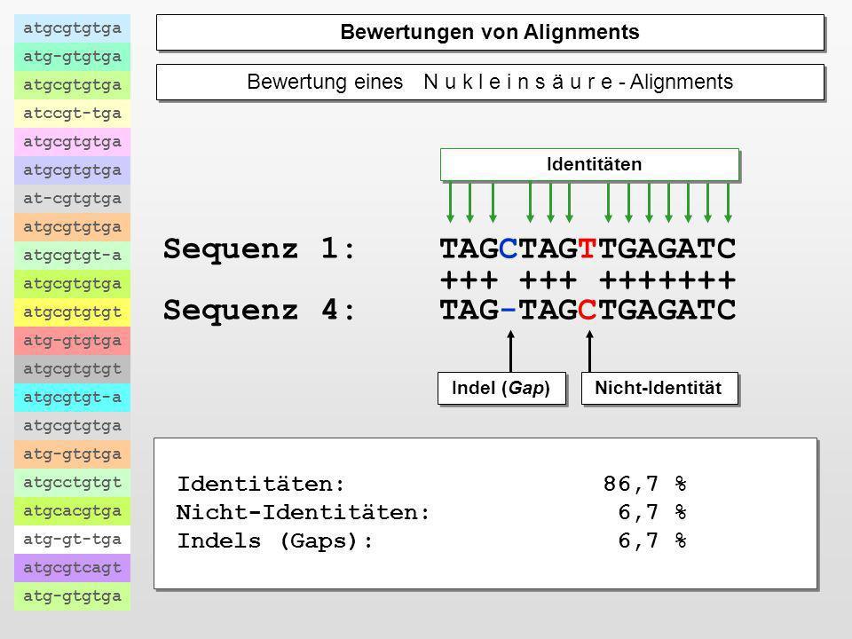 Der Vergleich biologischer Information Die Suche nach Ähnlichkeiten biologischer Information atgcgtgtga atg-gtgtga atgcgtgtga atccgt-tga atgcgtgtga at
