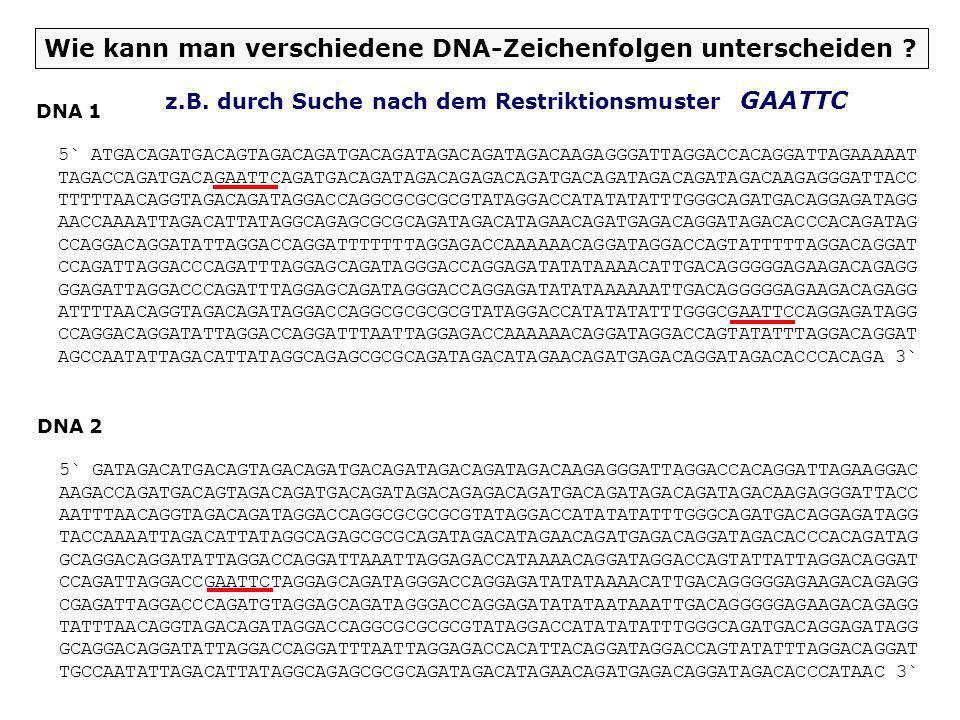 Wie kann man verschiedene DNA-Stränge unterscheiden ? Darstellung des DNA-Doppelstrangs als Kalottenmodell DNA 1 DNA 2 1 1 DNA-Mustererkennung