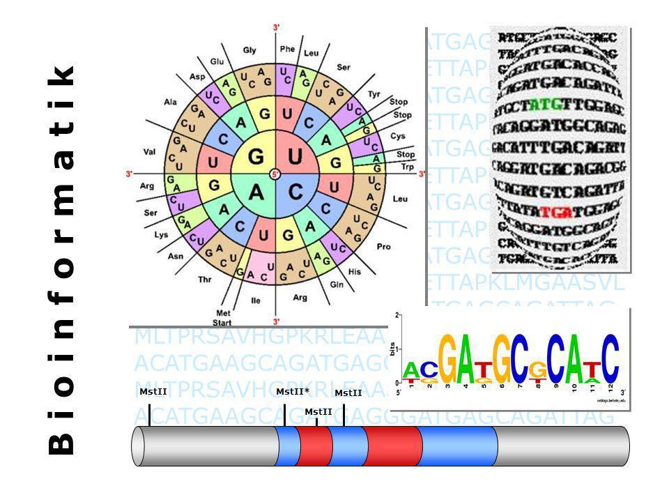 BTG Biotechnologisches Gymnasium Das Fach Bioinformatik