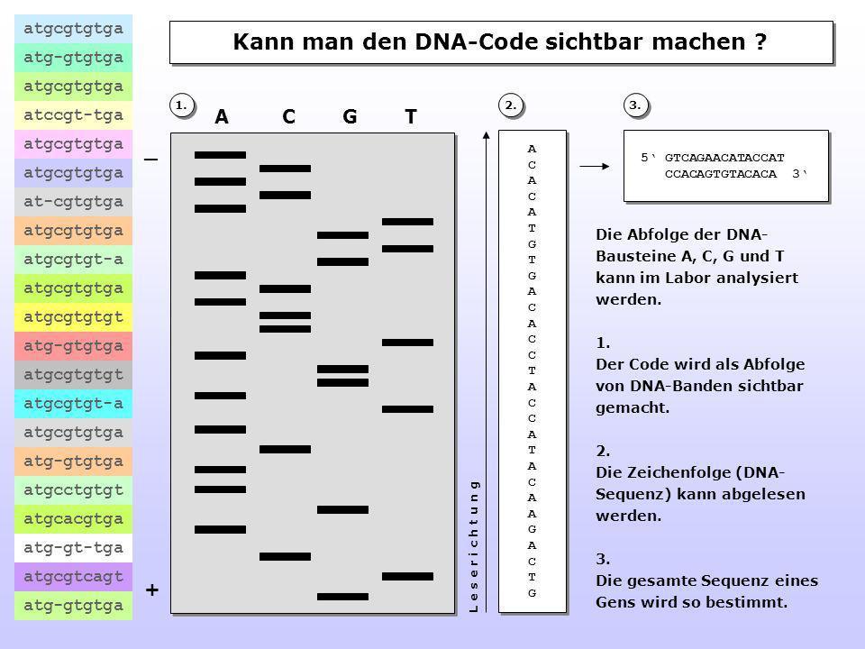 Kann man den DNA-Code sichtbar machen .