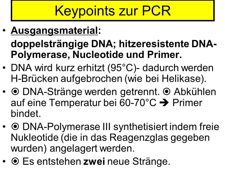 Keypoints zur PCR Ausgangsmaterial: doppelsträngige DNA; hitzeresistente DNA- Polymerase, Nucleotide und Primer. DNA wird kurz erhitzt (95°C)- dadurch