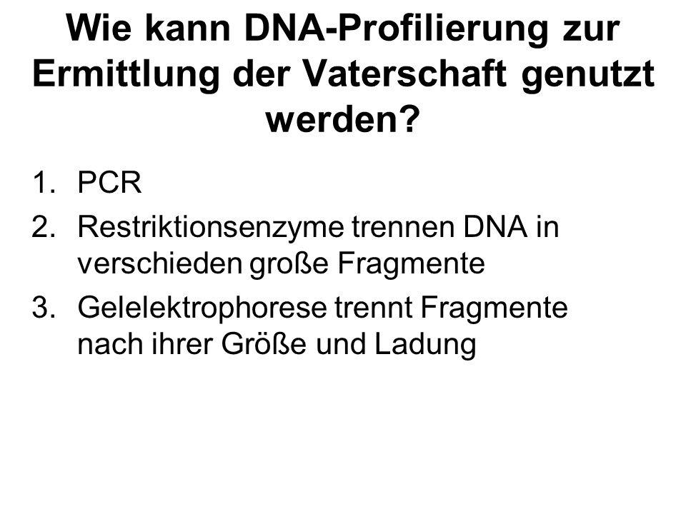 Wie kann DNA-Profilierung zur Ermittlung der Vaterschaft genutzt werden? 1.PCR 2.Restriktionsenzyme trennen DNA in verschieden große Fragmente 3.Gelel