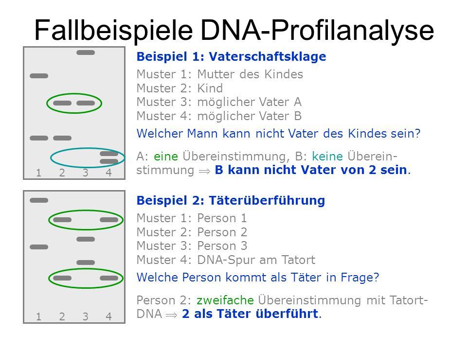 Fallbeispiele DNA-Profilanalyse 1234 Beispiel 1: Vaterschaftsklage Muster 1: Mutter des Kindes Muster 2: Kind Muster 3: möglicher Vater A Muster 4: mö