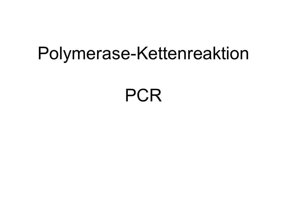 Polymerase-Kettenreaktion PCR