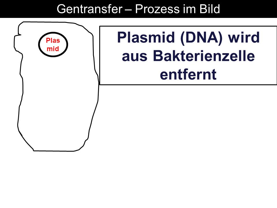 Plas mid Plasmid (DNA) wird aus Bakterienzelle entfernt Gentransfer – Prozess im Bild