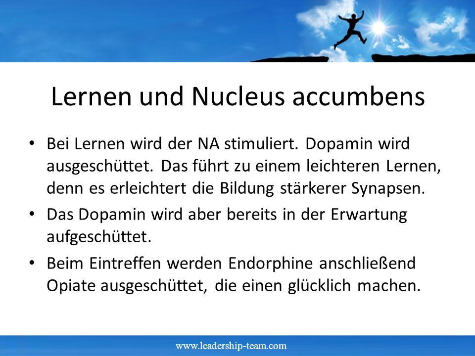 www.leadership-team.com Lernen und Nucleus accumbens Bei Lernen wird der NA stimuliert.