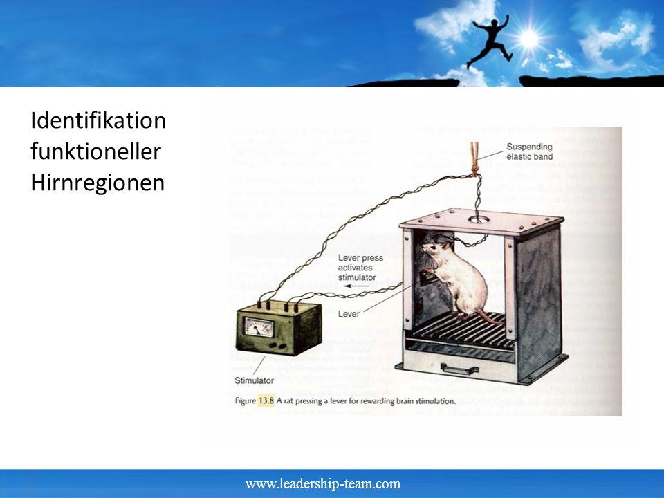 www.leadership-team.com Ratten und Nucleus accumbens Tests mit Ratten die sich selbst den Nucleus accubens mit Stromstößen reizen konnten, lösten diese Stromstöße rund 2000 Mal pro Stunde aus.