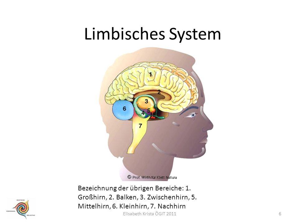 Limbisches System Bezeichnung der übrigen Bereiche: 1. Großhirn, 2. Balken, 3. Zwischenhirn, 5. Mittelhirn, 6. Kleinhirn, 7. Nachhirn 6Elisabeth Krist