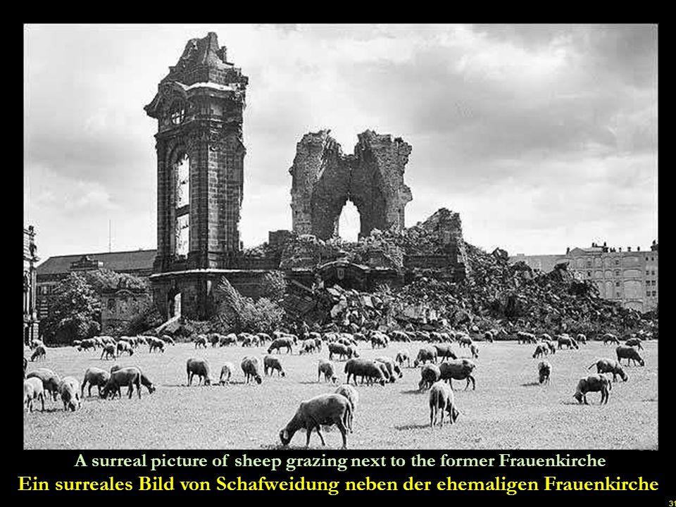 30 The removal of debris in front of the destroyed Frauenkirche begins Die Beseitigung von Schutt vor der zerstörten Frauenkirche beginnt u