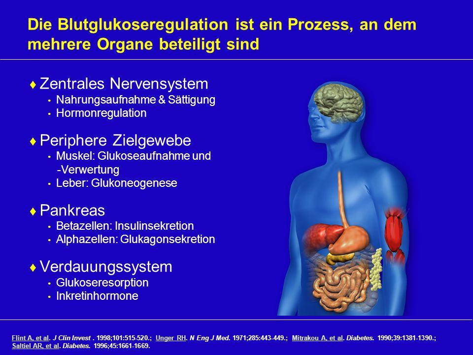 Die Blutglukoseregulation ist ein Prozess, an dem mehrere Organe beteiligt sind Zentrales Nervensystem Nahrungsaufnahme & Sättigung Hormonregulation P