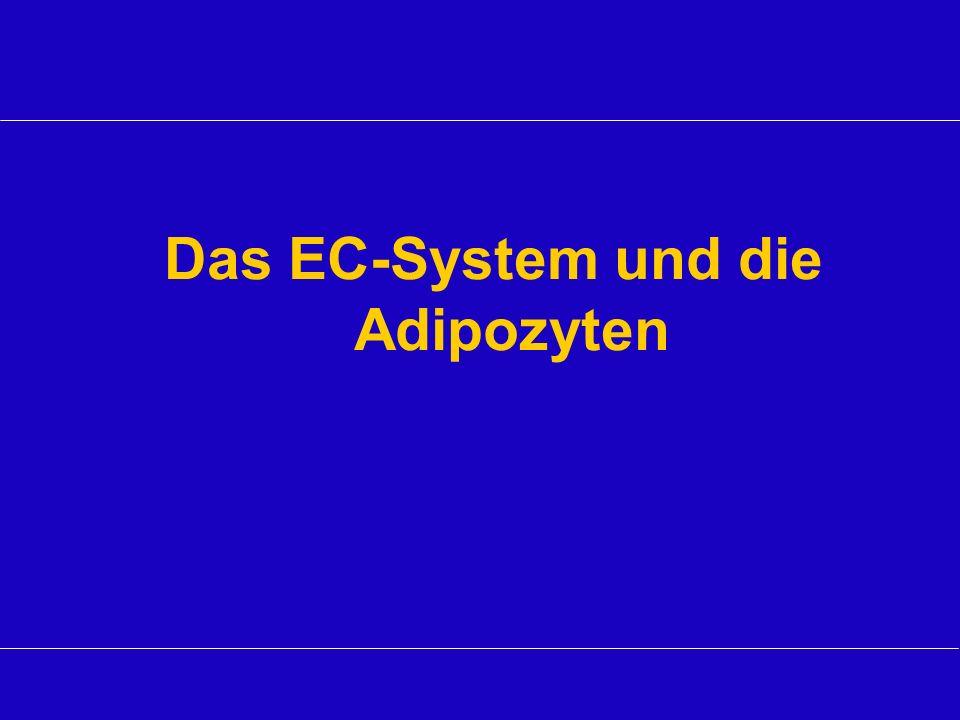 Das EC-System und die Adipozyten