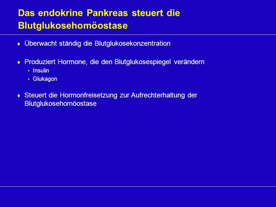 Das endokrine Pankreas steuert die Blutglukosehomöostase Überwacht ständig die Blutglukosekonzentration Produziert Hormone, die den Blutglukosespiegel