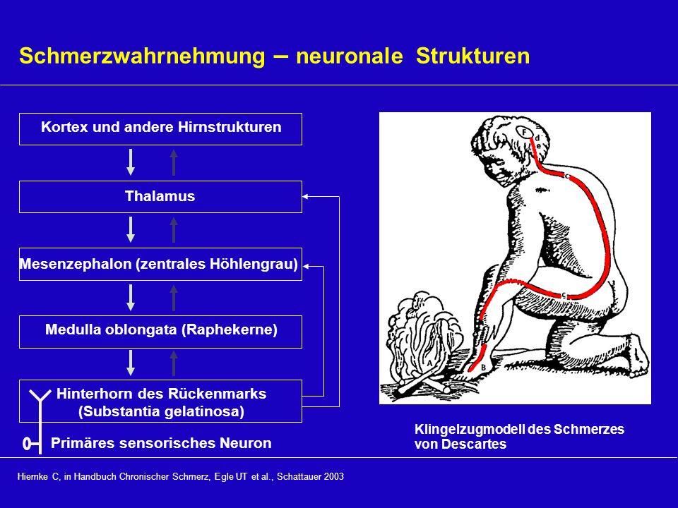 Schmerzwahrnehmung – neuronale Strukturen Hiemke C, in Handbuch Chronischer Schmerz, Egle UT et al., Schattauer 2003 Klingelzugmodell des Schmerzes vo