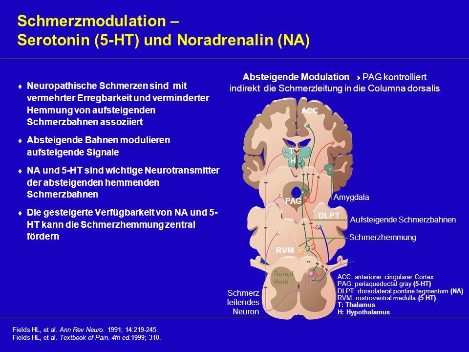Fields HL, et al. Ann Rev Neuro. 1991; 14:219-245. Fields HL, et al. Textbook of Pain. 4th ed.1999; 310. Schmerzmodulation – Serotonin (5-HT) und Nora
