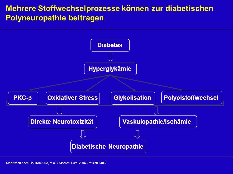 Mehrere Stoffwechselprozesse können zur diabetischen Polyneuropathie beitragen Modifiziert nach Boulton AJM, et al. Diabetes Care 2004;27:1458-1486. D