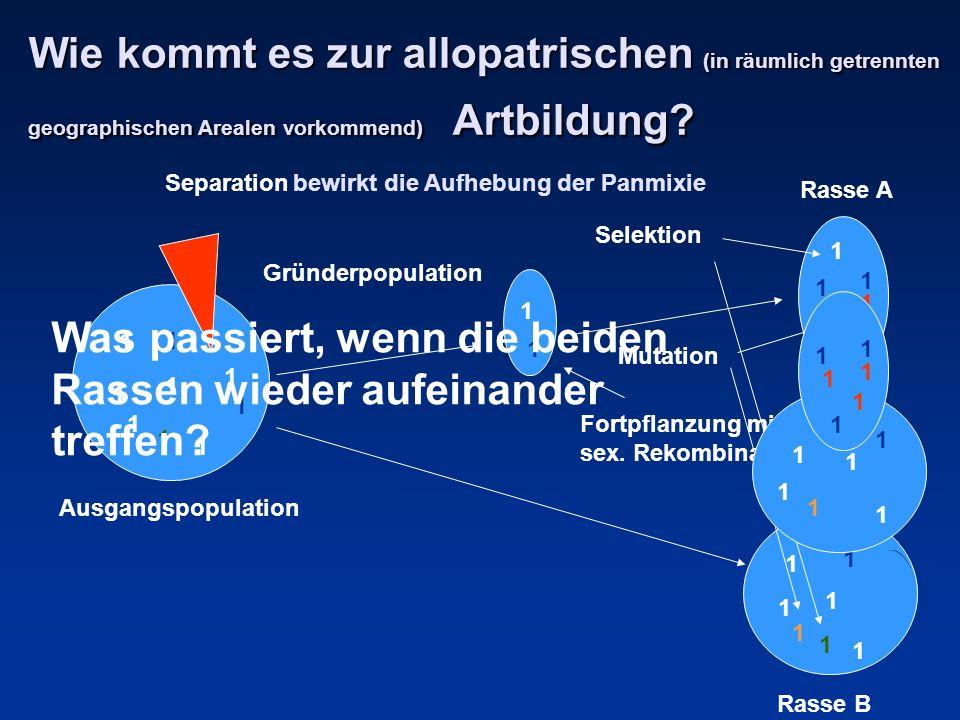 Wie kommt es zur allopatrischen (in räumlich getrennten geographischen Arealen vorkommend) Artbildung? Separation 1 1 1 1 1 1 1 1 1 1 1 1 1 1 1 1 1 Gr