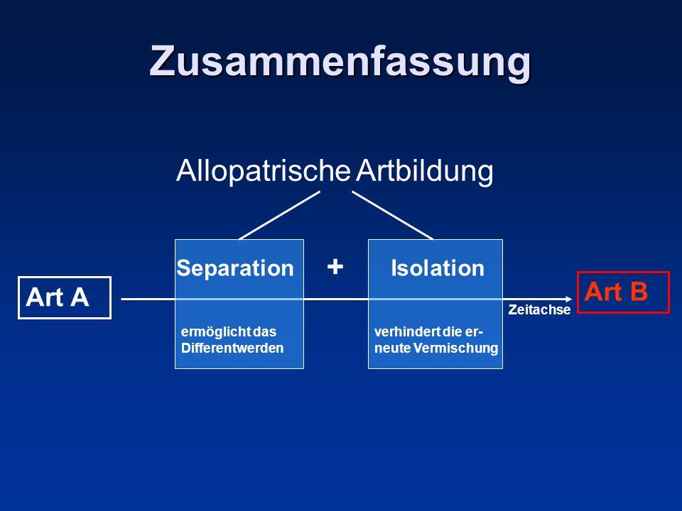 Zusammenfassung Allopatrische Artbildung Art A Zeitachse Art B ermöglicht das Differentwerden verhindert die er- neute Vermischung SeparationIsolation +