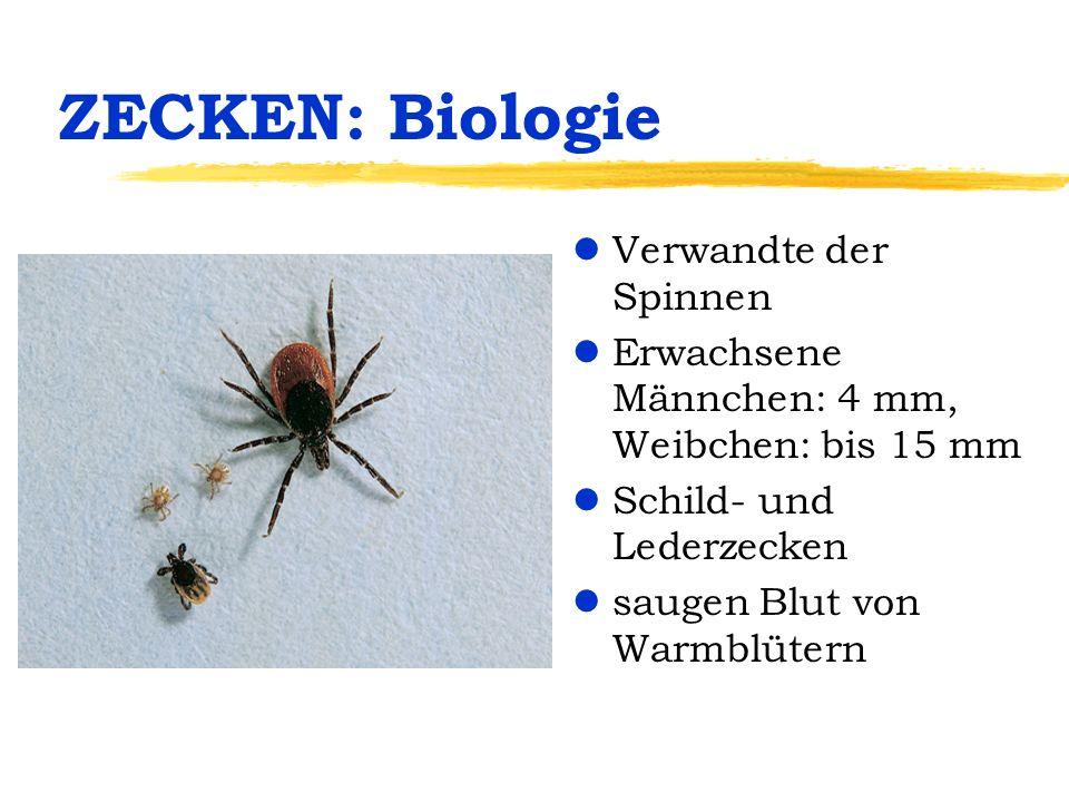 ZECKEN: Lebenskreislauf 3-wirtige Zecke lWeibchen legt bis 50 Eier am Boden ab lLarven (6-beinig) befallen meist nur Kleinsäuger oder Vögel (Verbreitung) lNymphen (8-beinig) befallen größere Säuger lErwachsene befallen größere Säuger