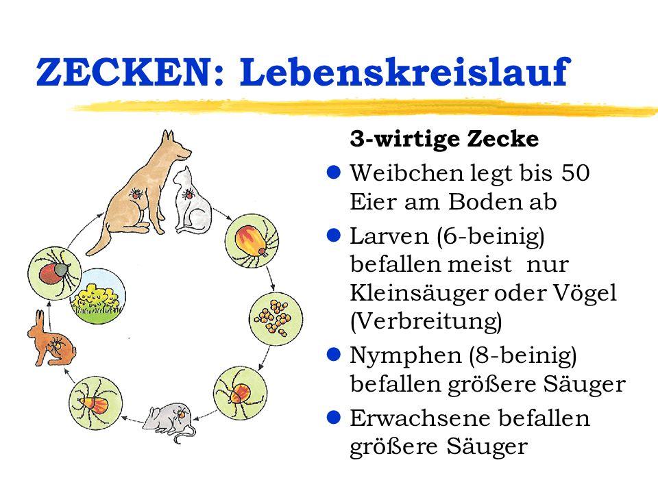 ZECKEN: Lebenskreislauf 3-wirtige Zecke lWeibchen legt bis 50 Eier am Boden ab lLarven (6-beinig) befallen meist nur Kleinsäuger oder Vögel (Verbreitu