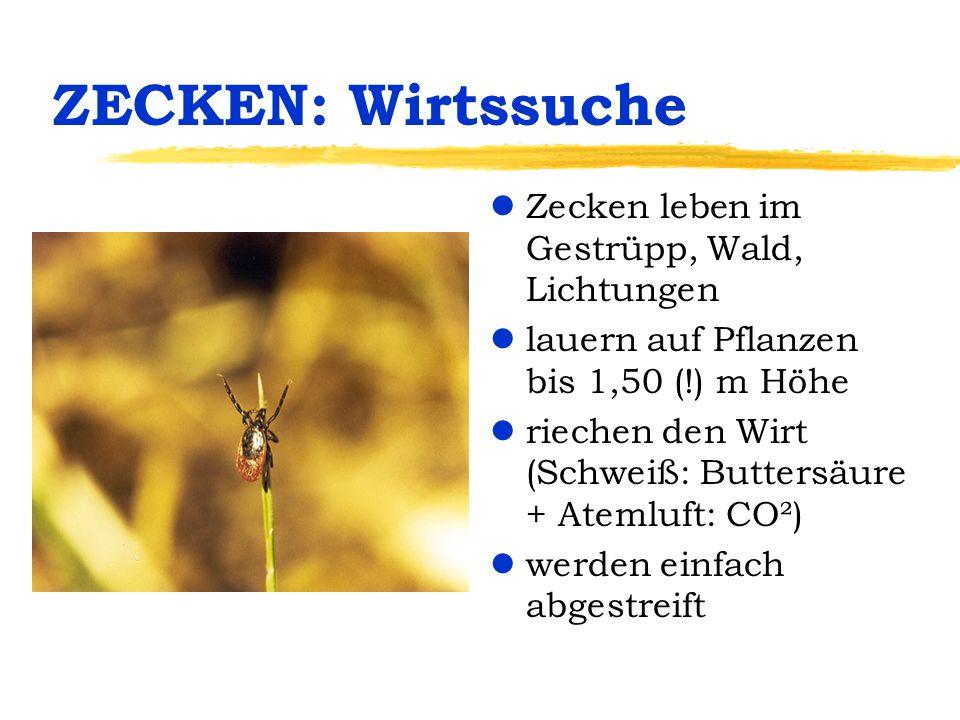 ZECKEN: Wirtssuche lZecken leben im Gestrüpp, Wald, Lichtungen llauern auf Pflanzen bis 1,50 (!) m Höhe lriechen den Wirt (Schweiß: Buttersäure + Atem