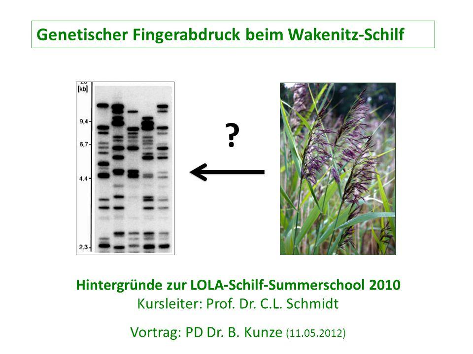 Genetischer Fingerabdruck beim Wakenitz-Schilf Hintergründe zur LOLA-Schilf-Summerschool 2010 Kursleiter: Prof. Dr. C.L. Schmidt Vortrag: PD Dr. B. Ku