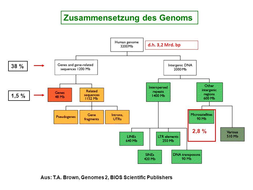 38 % 1,5 % Aus: T.A. Brown, Genomes 2, BIOS Scientific Publishers 2,8 % d.h. 3,2 Mrd. bp