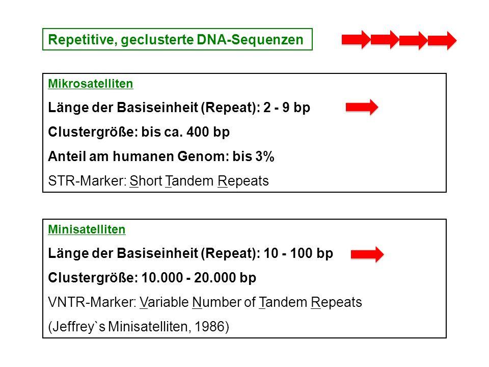 Repetitive, geclusterte DNA-Sequenzen Mikrosatelliten Länge der Basiseinheit (Repeat): 2 - 9 bp Clustergröße: bis ca. 400 bp Anteil am humanen Genom: