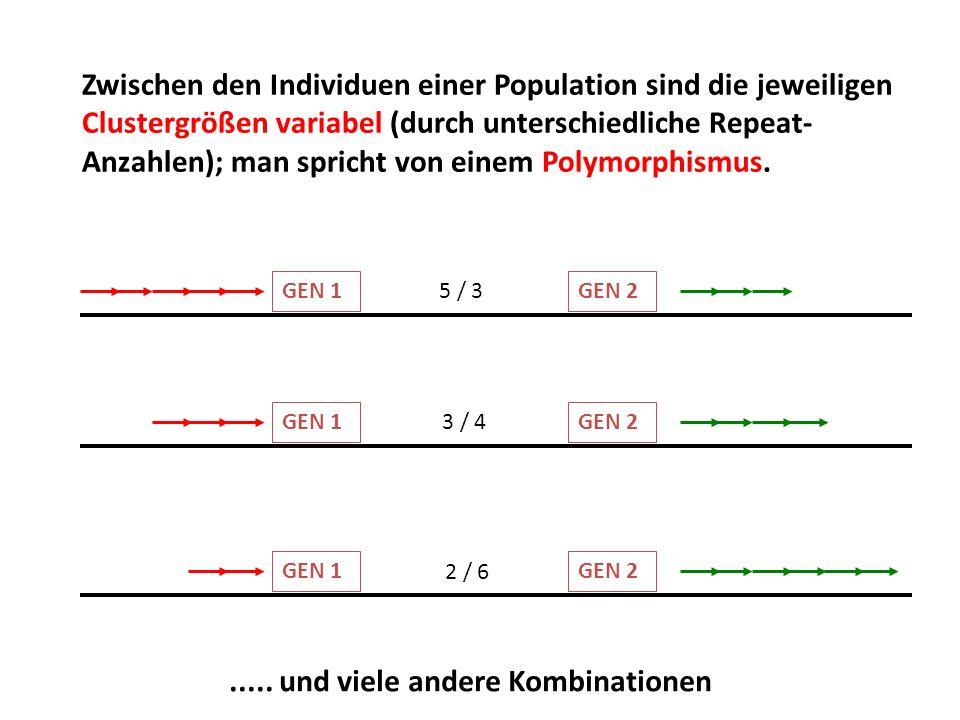 Zwischen den Individuen einer Population sind die jeweiligen Clustergrößen variabel (durch unterschiedliche Repeat- Anzahlen); man spricht von einem P