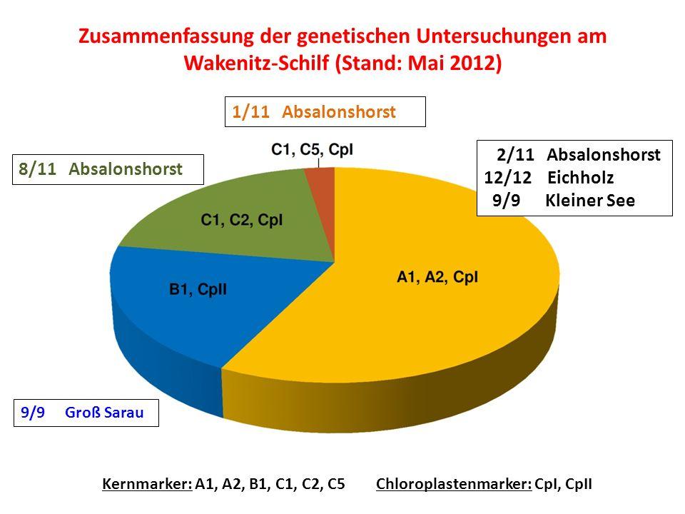 Zusammenfassung der genetischen Untersuchungen am Wakenitz-Schilf (Stand: Mai 2012) Kernmarker: A1, A2, B1, C1, C2, C5Chloroplastenmarker: CpI, CpII 2