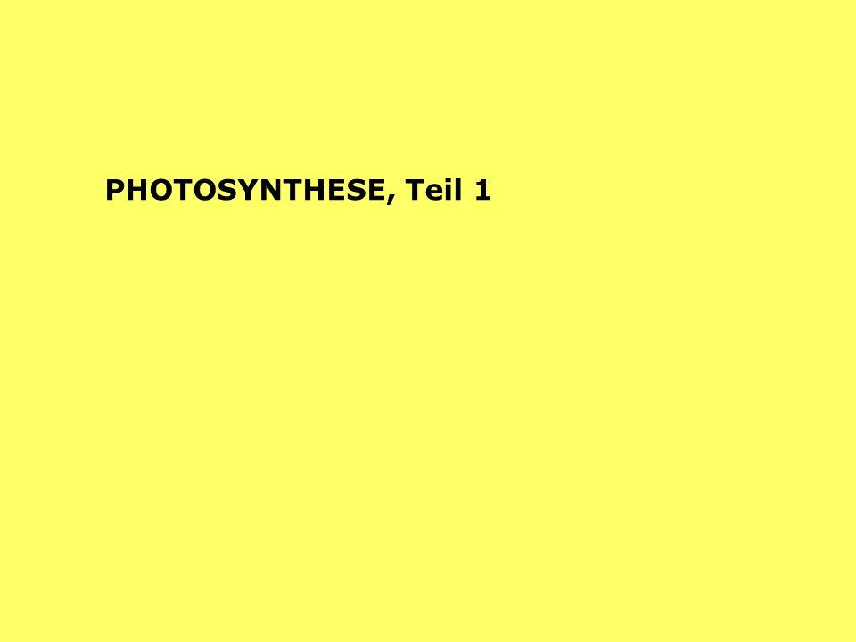 AUFBAU ORGANISCHER SUBSTANZ Photosynthese Assimilation Chemosynthese