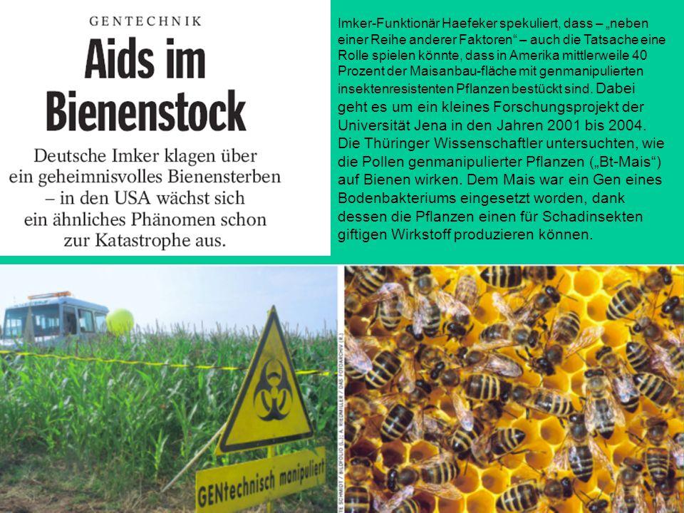 Imker-Funktionär Haefeker spekuliert, dass – neben einer Reihe anderer Faktoren – auch die Tatsache eine Rolle spielen könnte, dass in Amerika mittlerweile 40 Prozent der Maisanbau-fläche mit genmanipulierten insektenresistenten Pflanzen bestückt sind.