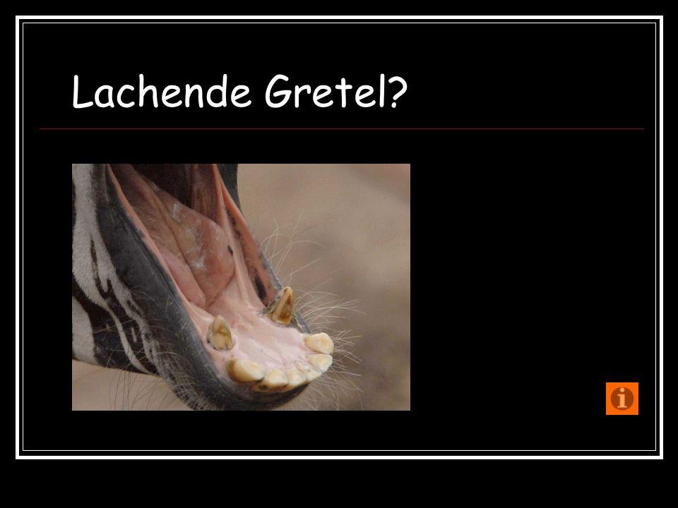 Lachende Gretel?