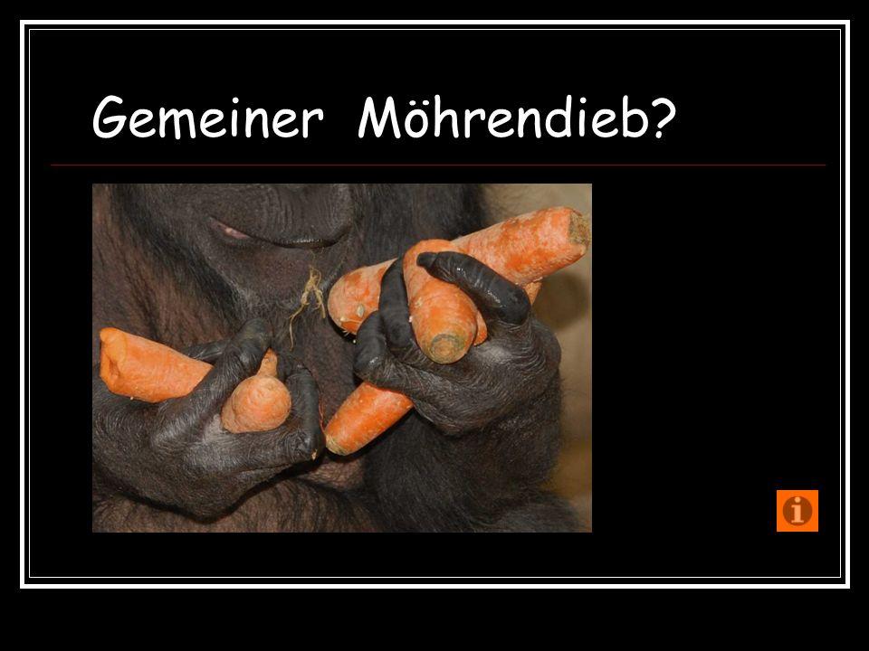 Verfasser und alle Fotos:Erwin Bastian 2009 Herausgeber:Landeshauptstadt Hannover Fachbereich Bibliothek und Schule Zooschule Hannover Adenauerallee 3 30175 Hannover Tel:0511 / 28074 – 125 Fax:0511 / 28074 – 126 E-Mail:zooschule@zoo-hannover.dezooschule@zoo-hannover.de Internet: www.zooschule-hannover.dewww.zooschule-hannover.de Beenden