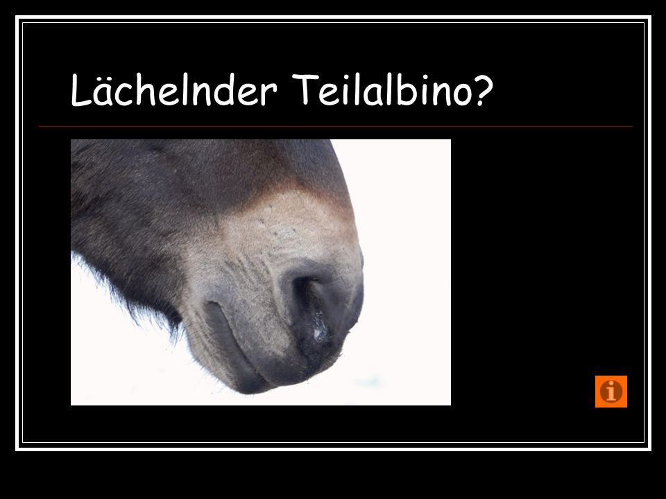 Lächelnder Teilalbino?